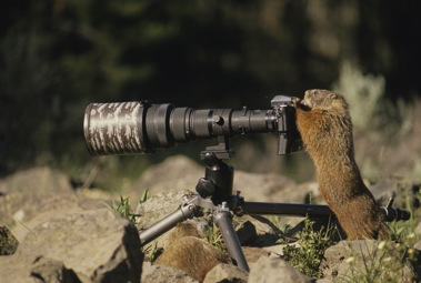 Marmot with a telescope!
