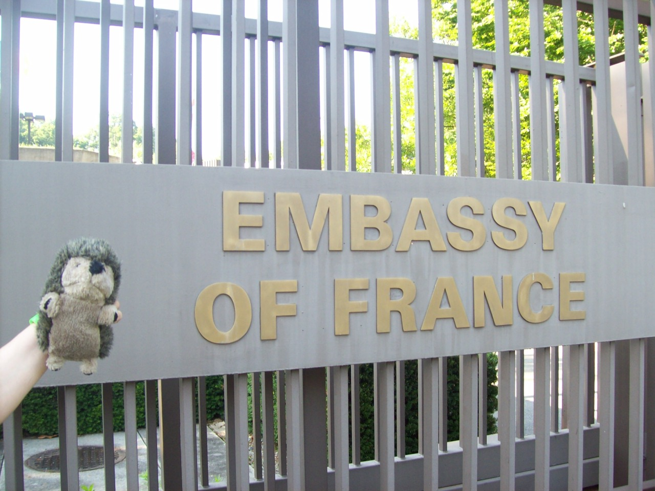 marmot_french_embassy